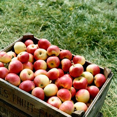 غذاهای مفید برای کاهش کلسترول خون,سیب