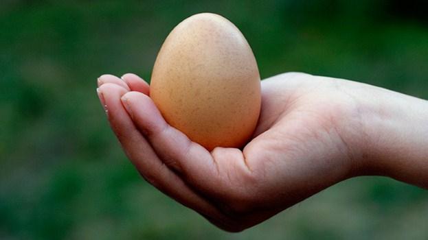 اثرات تخم مرغ بر روی سلامت