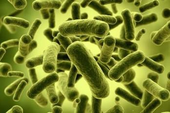 پروبیوتیکها: هر آنچه باید دربارهی آنها بدانید.