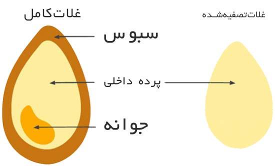 اجزای مختلف غلات