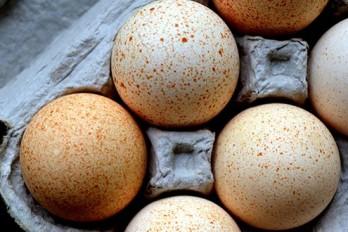 ۷ دلیل برای جایگزینی تخم مرغ با غلات صبحانه