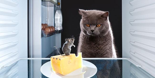 آیا پنیر باعث لاغری می شود؟ رابطه پنیر و کاهش وزن