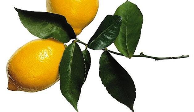 لیموناد زنجبیلی