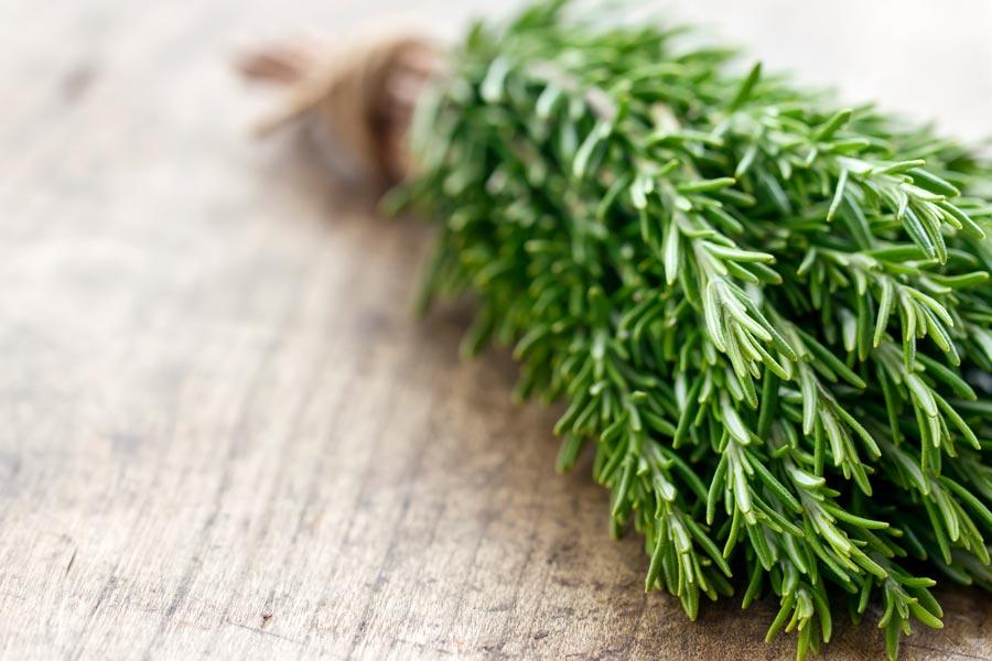 خواص گیاه دارویی رزماری - فواید رزماری برای پوست و مو