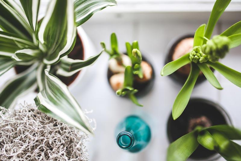 بهترین گیاهان خانگی برای بهبود سلامت - گیاه آپارتمانی