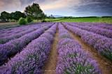 گیاهان کاهش استرس