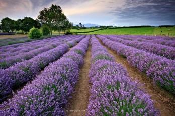 درمان پانیک و استرس با گیاهان دارویی