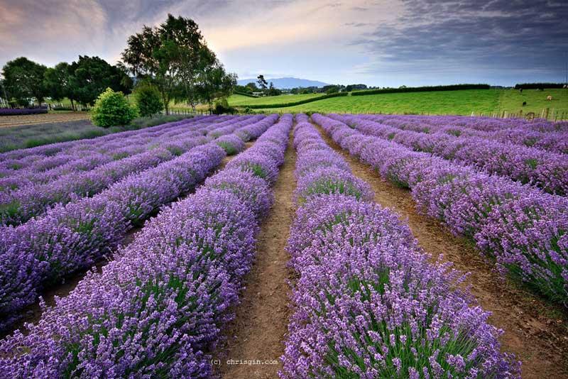 درمان پانیک و استرس با گیاهان دارویی - 6 گیاه دارویی ضداسترس