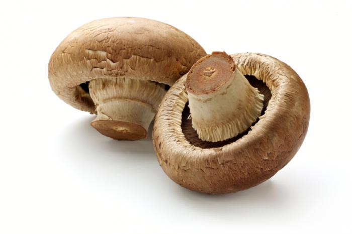 خواص قارچ mushrooms