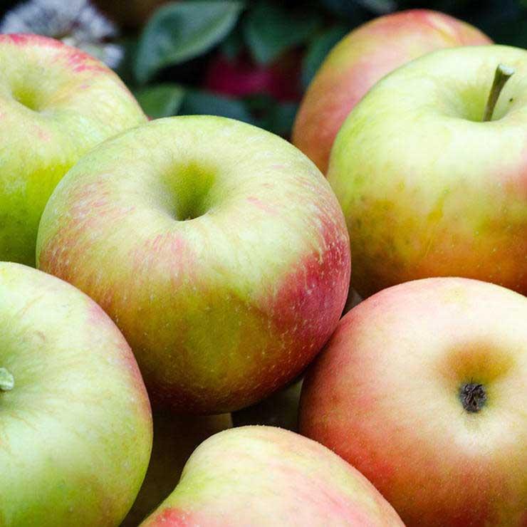 برای رفع گرسنگی چه بخوریم,سیر شدن,سیب
