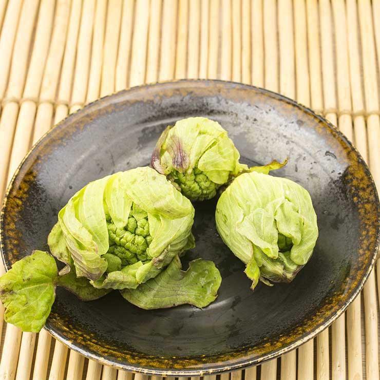 رژیم غذایی درمان میگرن,گیاه سایبان برای میگرن