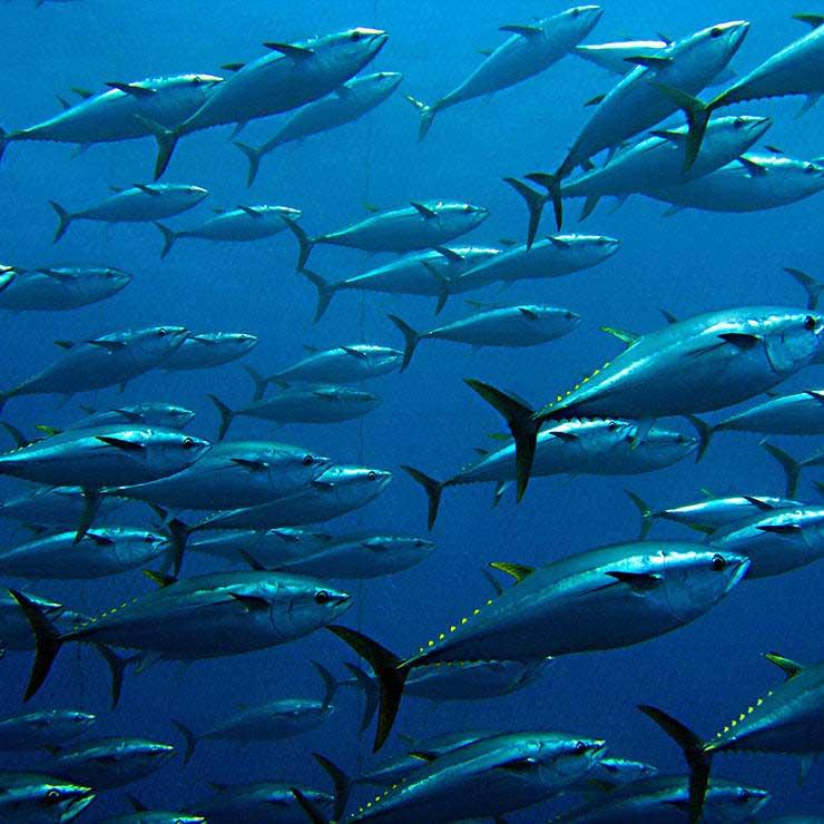 ماهیهای سرشار از جیوه