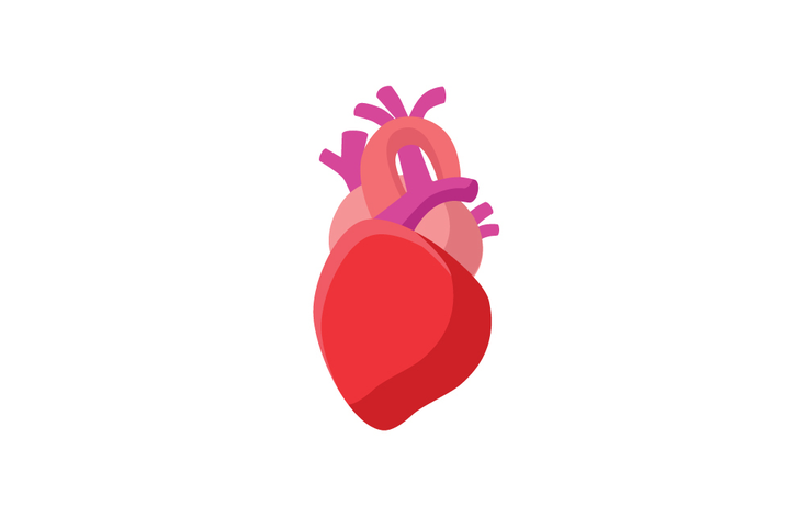 shutterstock_232334788-heart-races-fundamentaldesigns