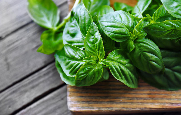 داروی گیاهی سرماخوردگی,basil-ریحان