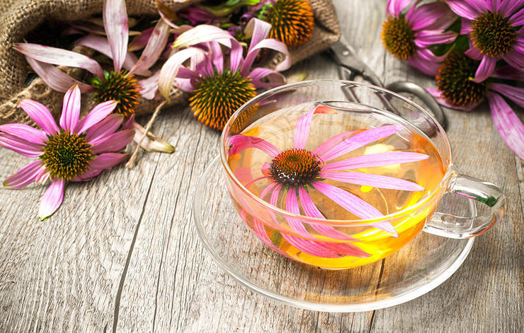 داروی گیاهی سرماخوردگی,echinacea-سرخار گل