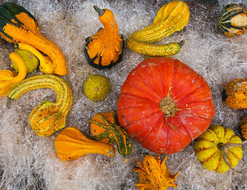 fall_food_weight_loss_winter_squash کدو حلوایی زمستانی