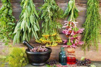 داروهای گیاهی برای سرماخوردگی