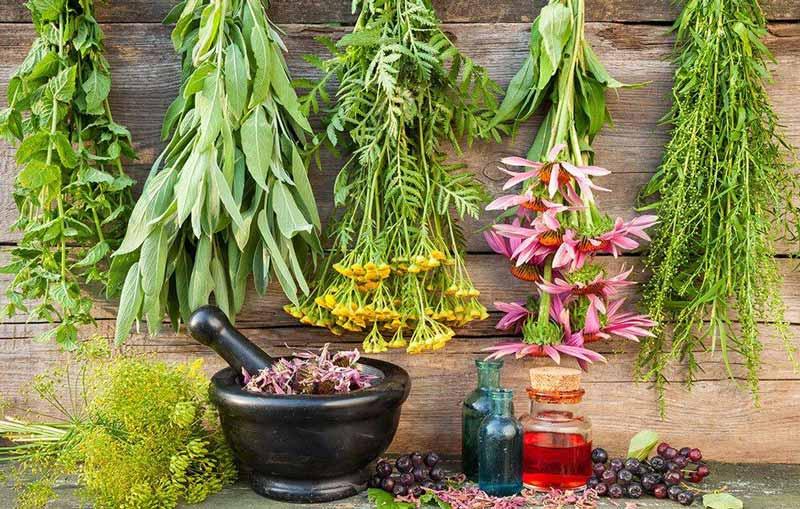 10 مورد از گیاهان دارویی ضد سرماخوردگی - درمان های طب سنتی
