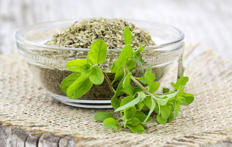 داروی گیاهی درمان سرماخوردگی,marjoram-مرزنجوش