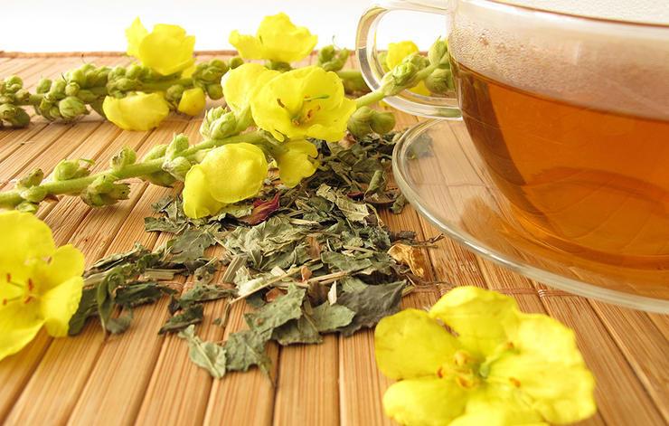 داروی گیاهی درمان سرماخوردگی,mullein-گل ماهور اروپایی