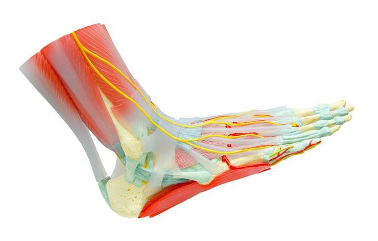 علائم وجود لخته خون,shutterstock_224942701-leg-arm-pain-gam1983