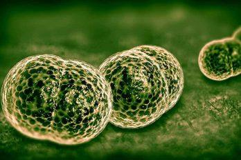 ۵ نشانه بیماری مننژیت که باید بدانید