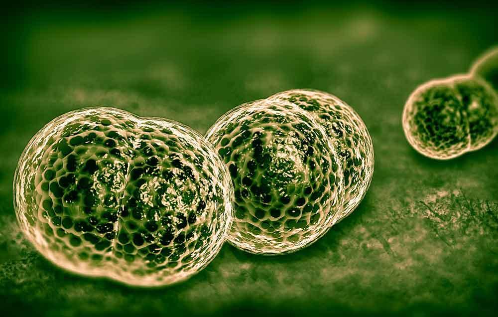5 نشانه بیماری مننژیت که باید بدانید - علائم مننژیت در بزرگسالان چیست؟