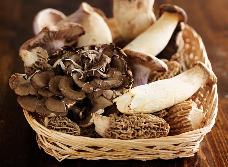 wild-mushrooms قارچ