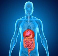 Digestive-System-کمک به هضم