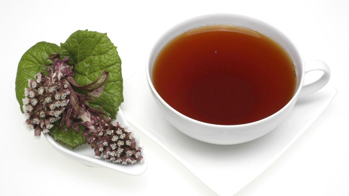درمان آلرژی بهاری,butterbur گیاه سایبان