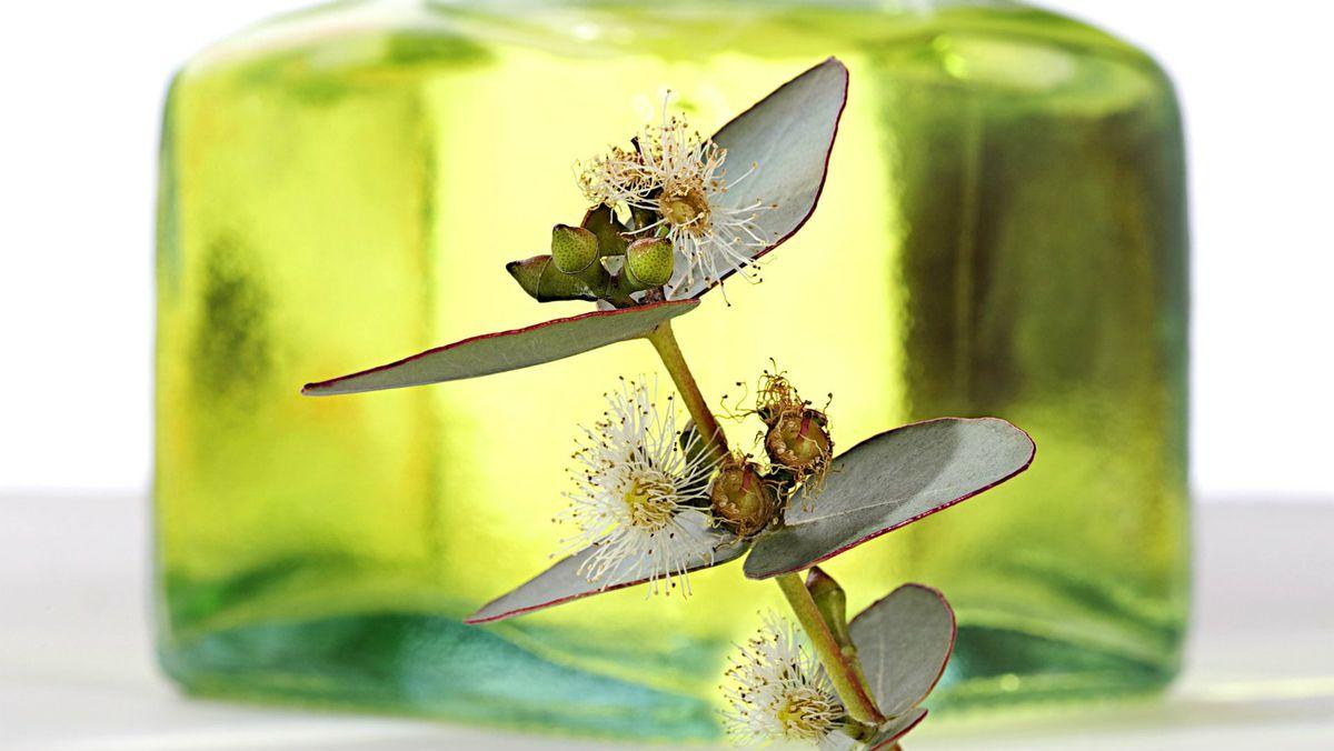 درمان آلرژی بهاری,eucalyptus