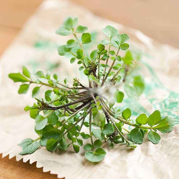 5 گیاه دارویی برای سلامت و تقویت مغز