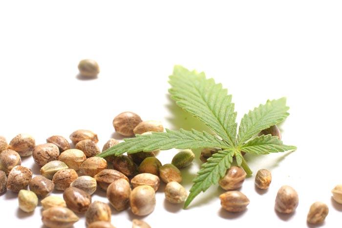 شاهدانه در برابر ماریجوانا