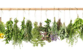 ۵ داروی گیاهی برای کاهش وزن