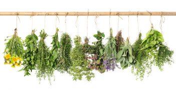 گیاهان کاهش وزن