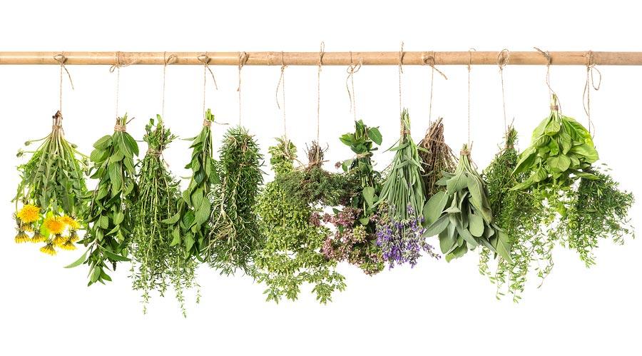 گیاهان دارویی برای لاغری,داروی گیاهی کاهش وزن