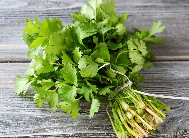 از بین بردن سریع نفخ شکم,cilantro