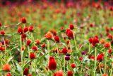 آلرژی فصل بهار