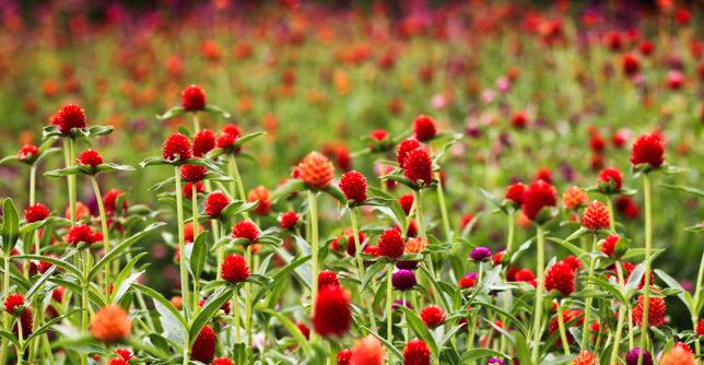 بهترین روشها برای درمان و کاهش آلرژی فصل بهار
