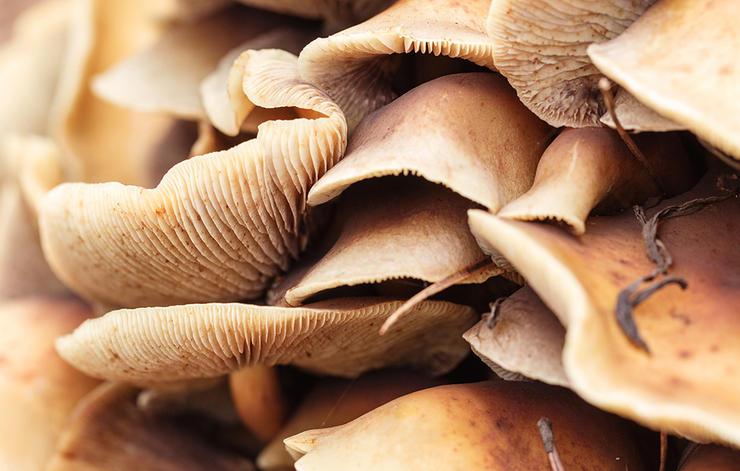 درمان های جدید افسردگی,قارچ های جادویی