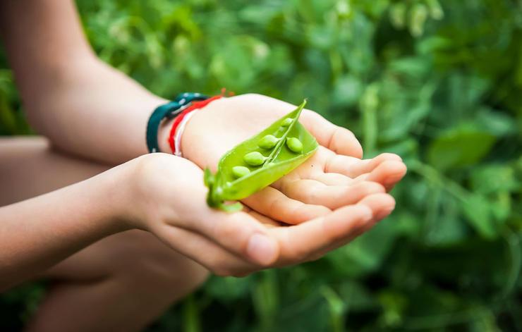 خواص رژیم گیاهخواری برای بدن