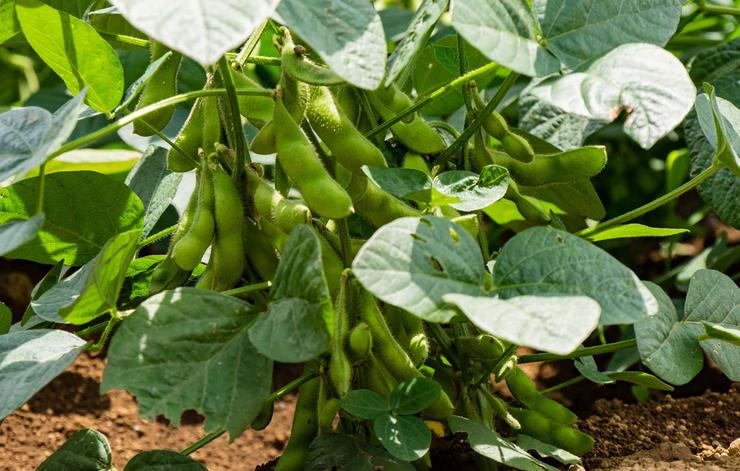 پروتئین گیاهی,منابع غنی از پروتئین گیاهی