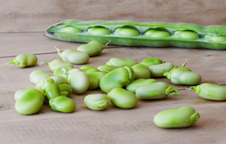 بهترین منبع گیاهی پروتئین