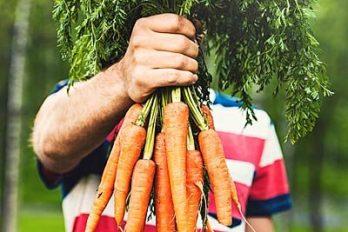 خواص روغن دانه هویج