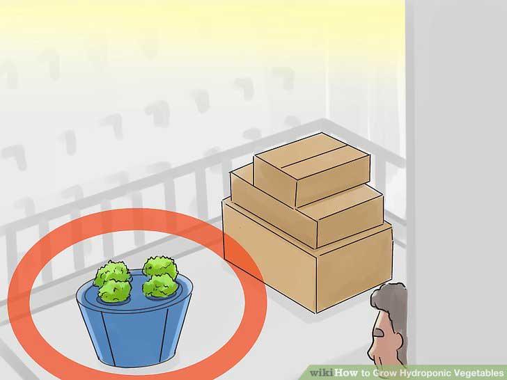 Grow-Hydroponic-Vegetables فضای کشت هیدروپونیک