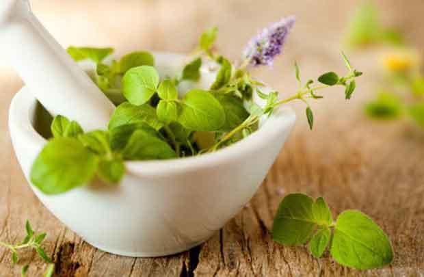 herbs گیاهان دارویی