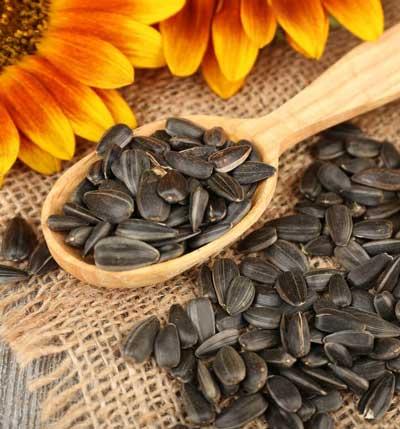 sunflowers-seeds-دانه های آفتابگردان
