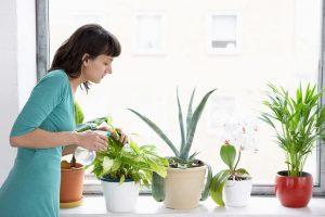 گیاهان آپارتمانی عالی برای افراد تنبل