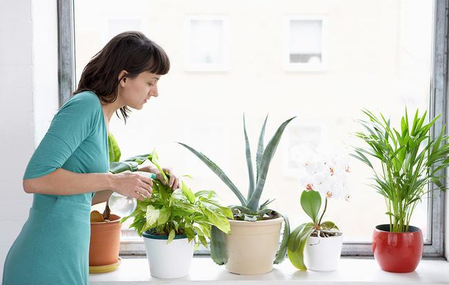 گیاهان آپارتمانی عالی برای افراد تنبل - 10 گیاه با مراقبت کم