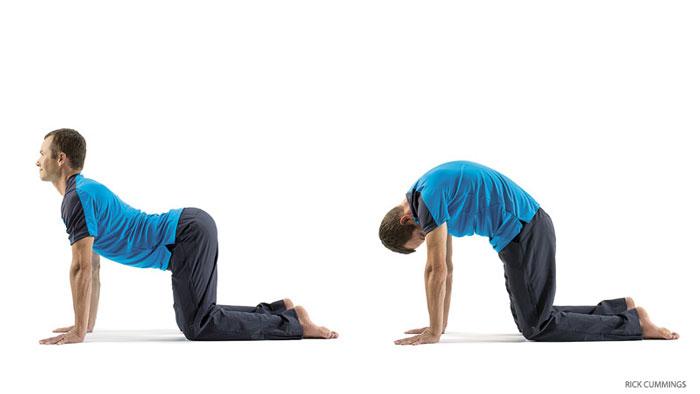 201504 yjmag cat cow pose ورزش های تقویت عضله کمر و تمرینات کششی کمردرد سلامت